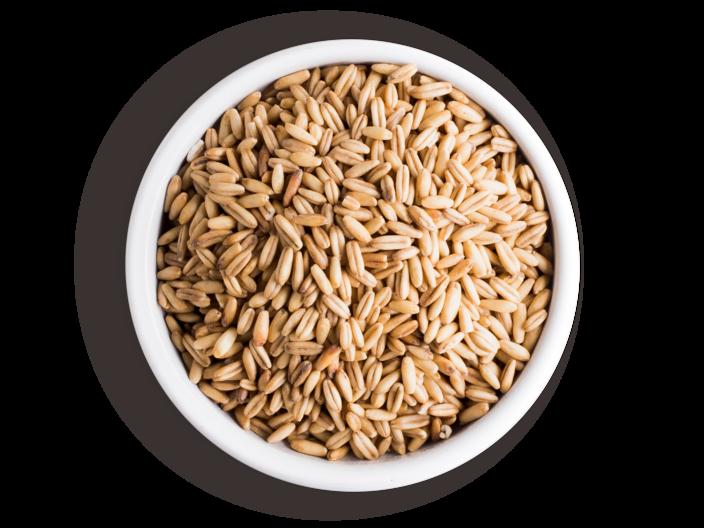 Picture organic oat grains