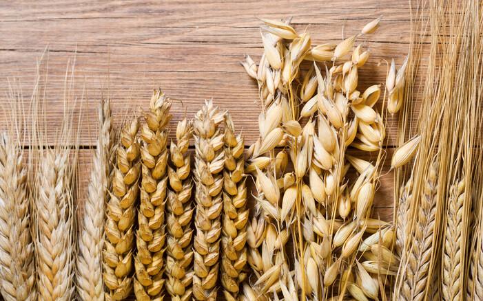Abbildung verschiedene Getreideähren